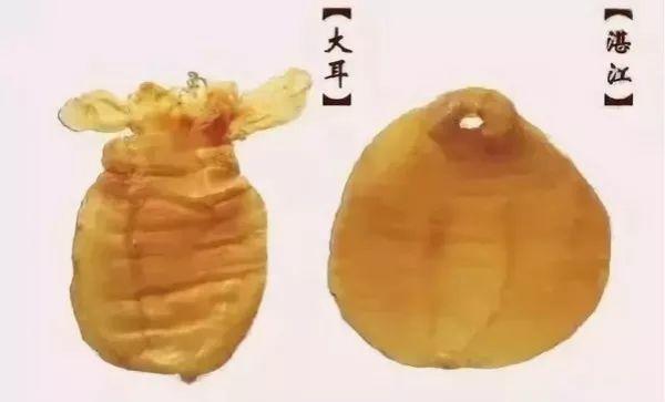 鱼胶***期:史上最全的鱼胶分类(附图),涨见识