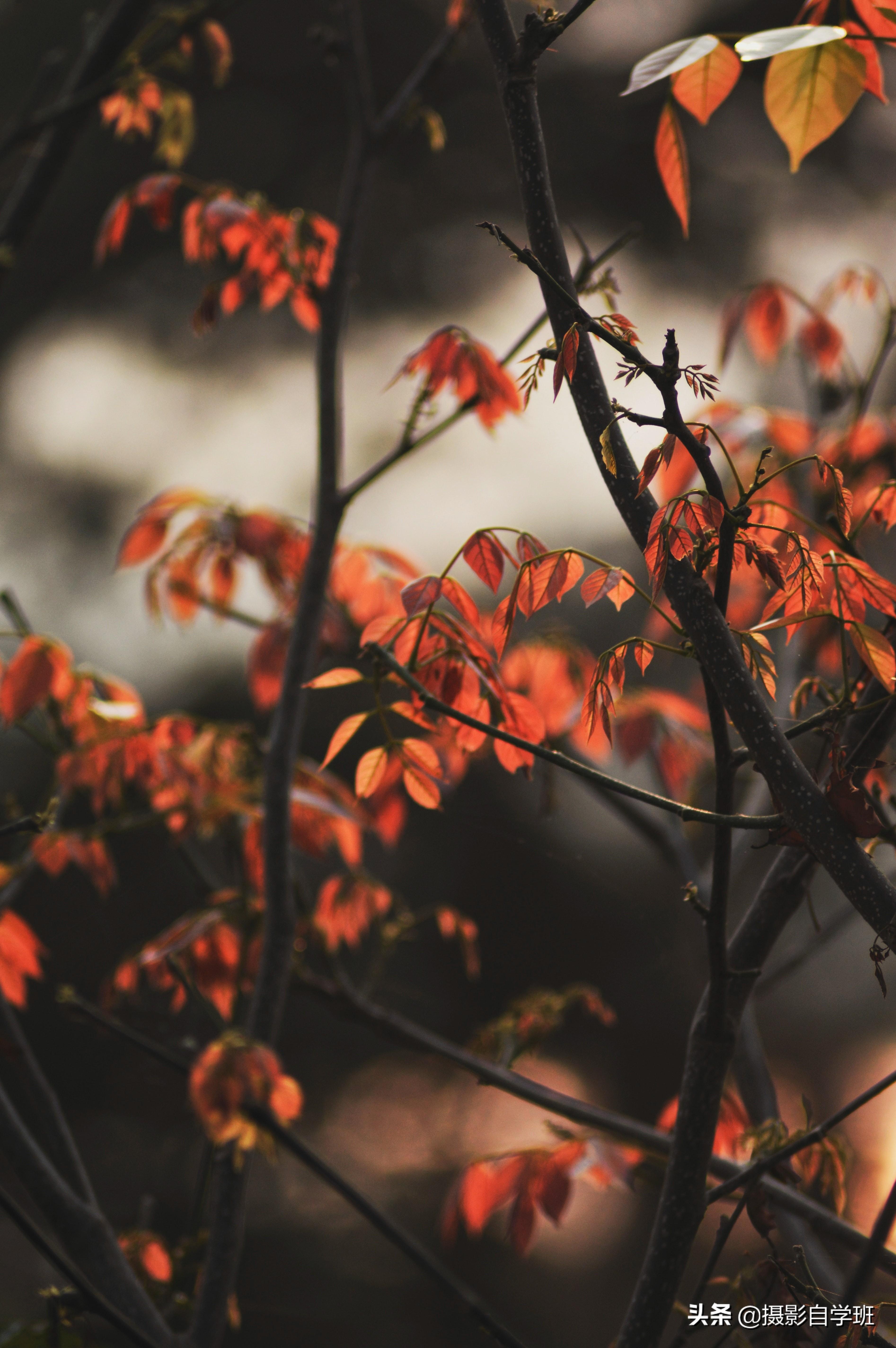 拍秋天10大技巧,对比讲解10大忌讳,帮你的秋天摄影照片更美