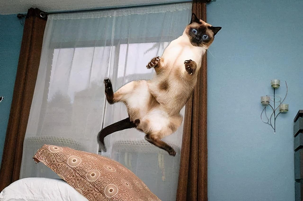 挑食、狂奔、偷窥主人,猫咪的这些奇葩行为竟都是智商高的表现?
