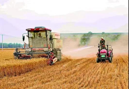 """央媒点名""""形式主义割麦子"""",农民痛诉:一天花400,一辈子没经历过这"""