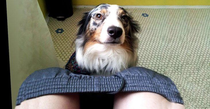 狗狗总爱跟着主人上厕所,你以为是狗狗黏人?其实还有这4个原因