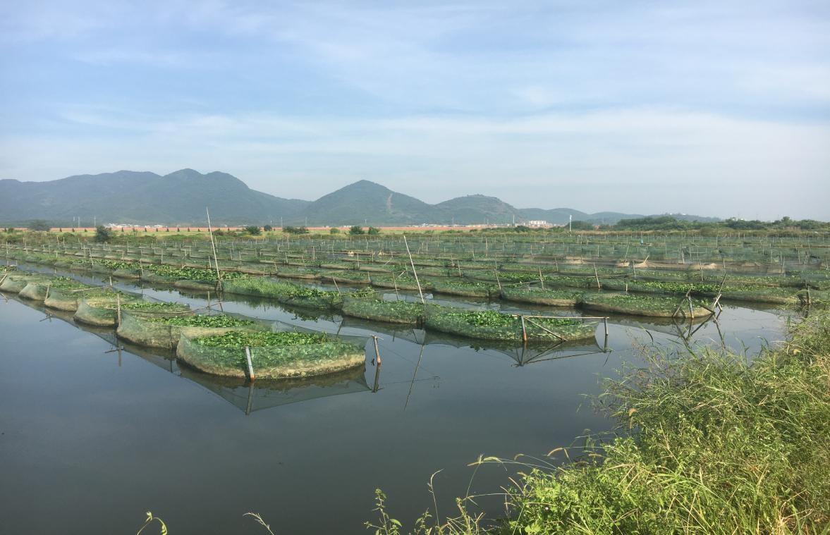 助力阳新乡村振兴 湖北省农业信贷担保公司3年为569农户贷款超2.5亿元