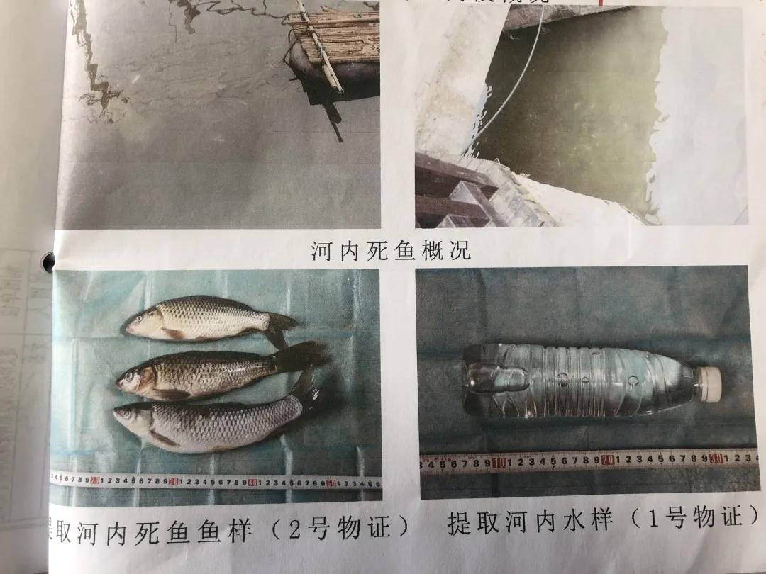 气愤!为吃3斤鱼,4男子投毒致2.2公里河段鱼类几近灭绝