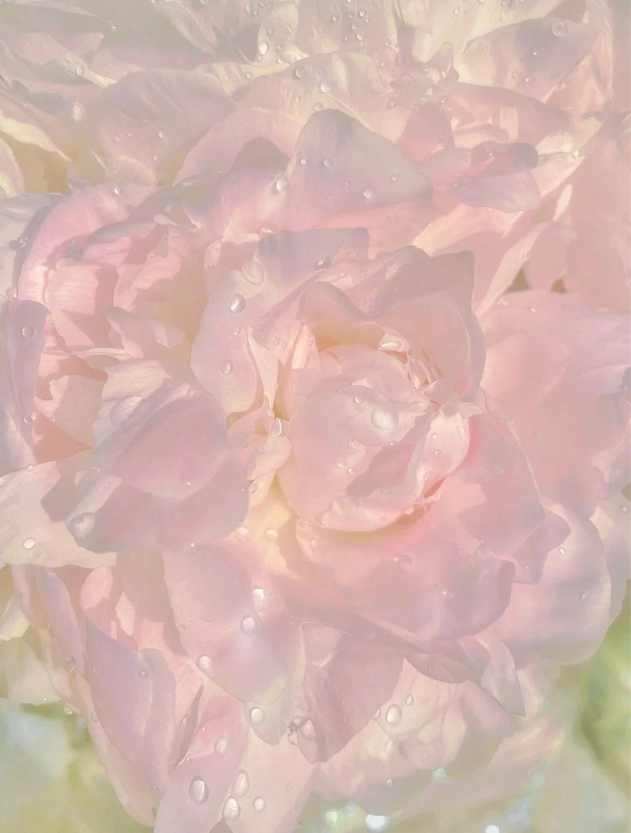夢幻七夕,我和粉色香水有個約會