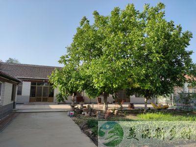 天津农村800平的院子,年租金才2万,房主:不在乎租金多少