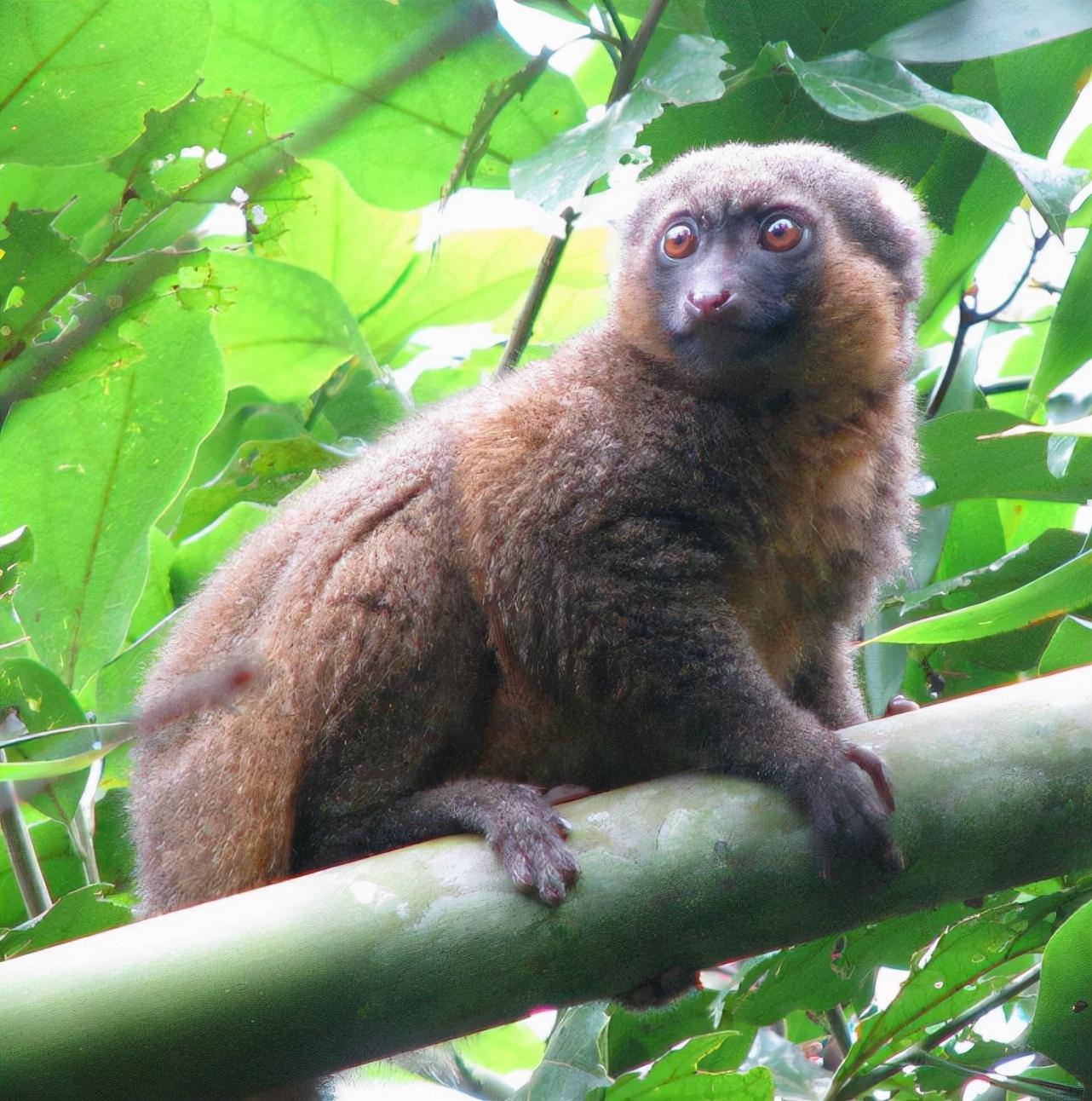 近一年多全球新增10种已灭绝动物,有的从发现到灭绝不到一年时间