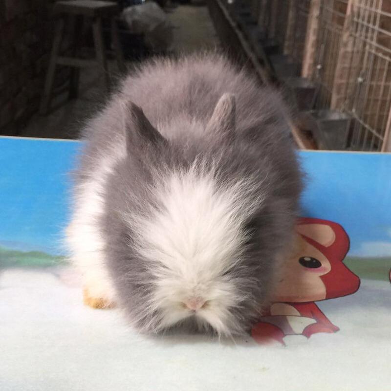 幾種常見的兔子介紹