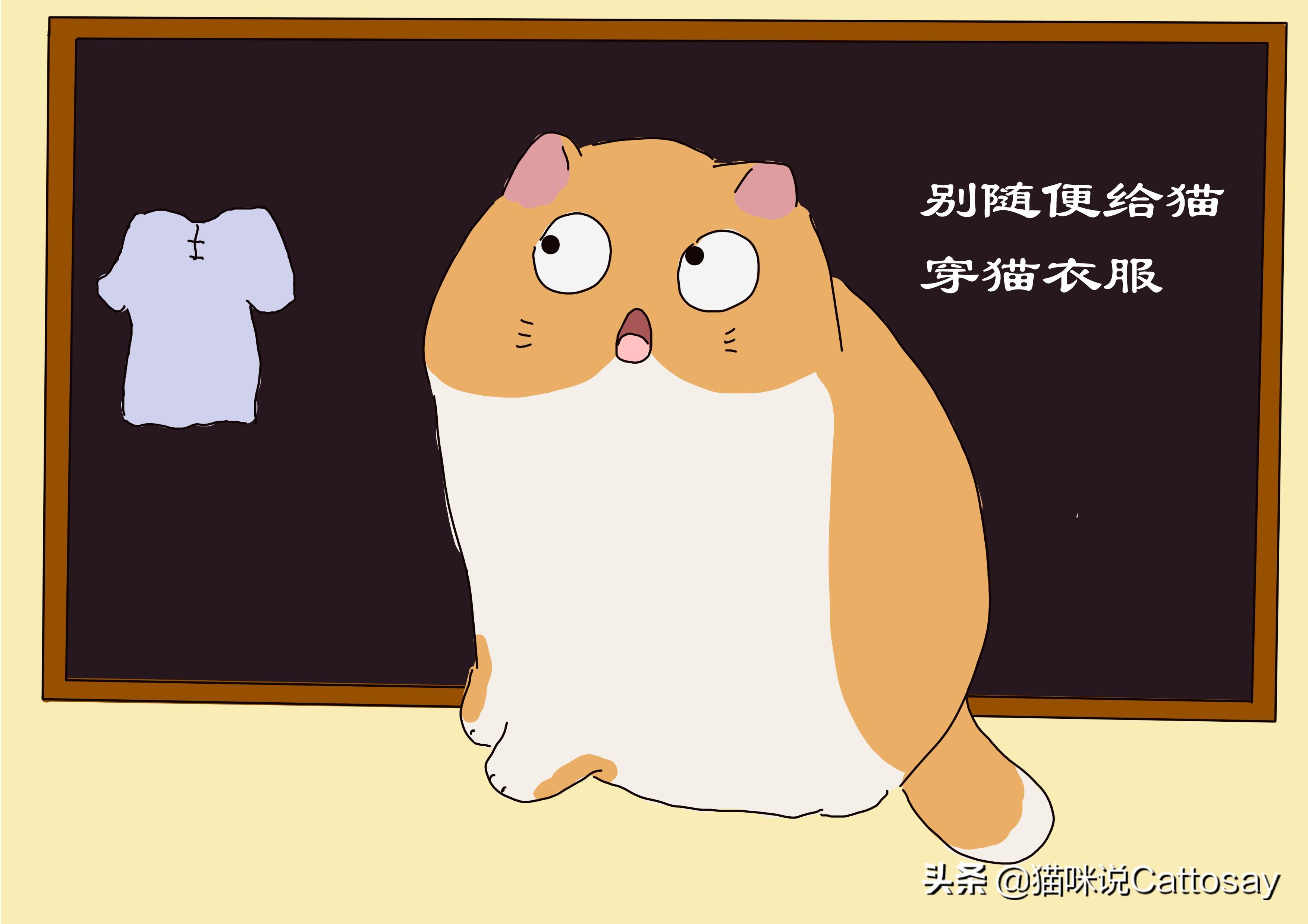 铲屎官别随便给猫穿衣服,猫并不需要衣服