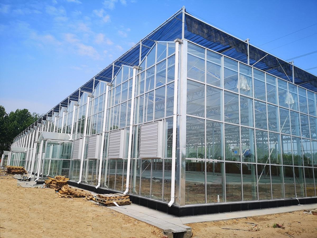 用数据说话北方连栋玻璃温室大棚在夏天到底可以降低多少度?