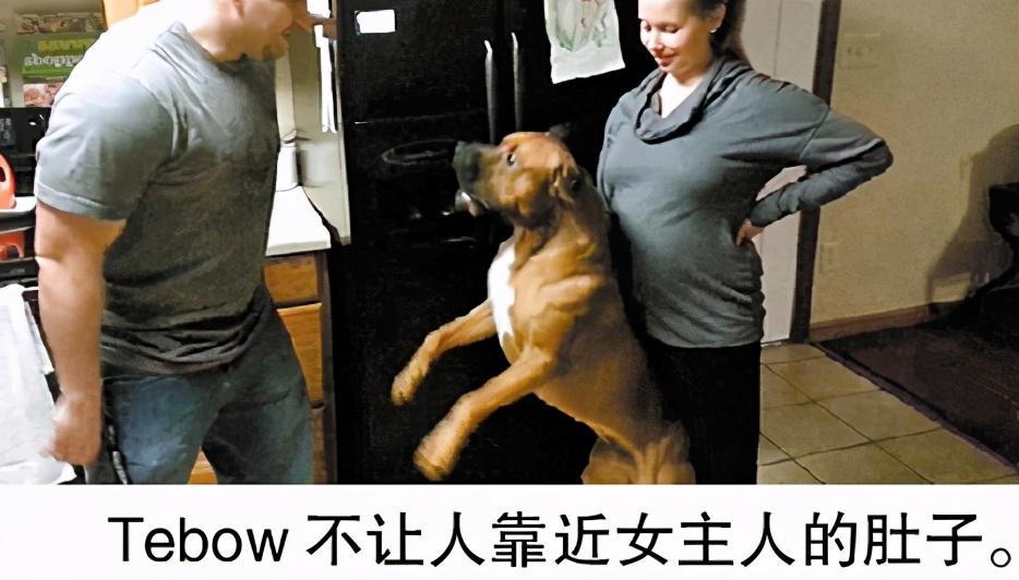 狗狗有这6个表现,说明它正在担心你,狗:主人你没事吧?