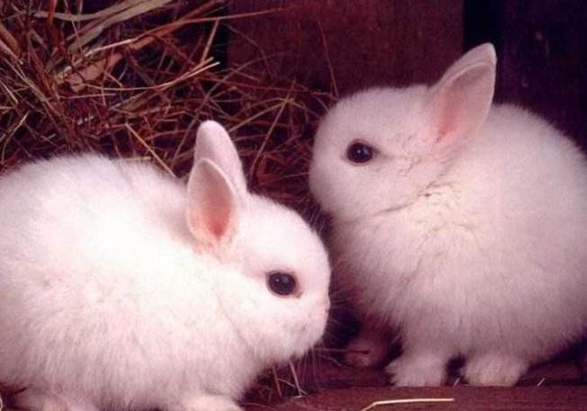 适合住楼的人饲养的5种宠物,干净颜值高,有你喜欢的吗?