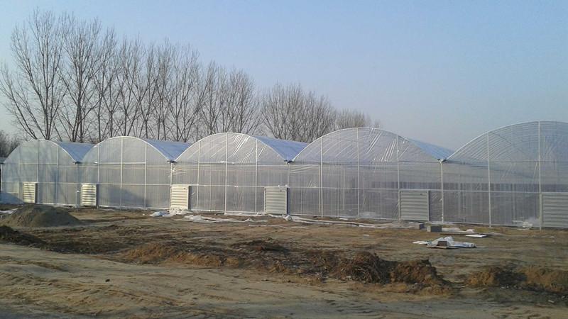 塑料温室大棚抗风性如何,温室大棚的风压取值对大棚的设计参考