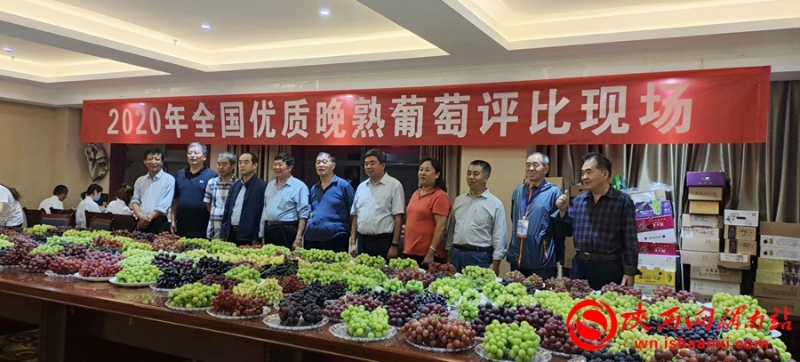2020年全国葡萄产业发展学术研讨会在合阳举办(组图)