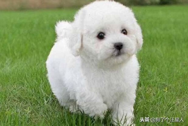 小狗吃什么狗糧好?幼犬狗糧排行榜