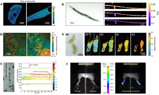 《自然—方法学》重磅综述:纳米测温学研究进展和未来发展趋势