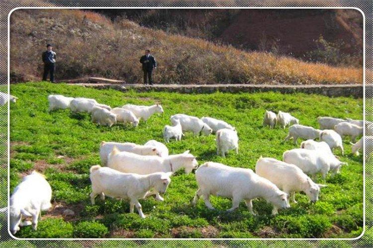 50岁的人想在农村发展畜牧业,养什么比较好,有前景?
