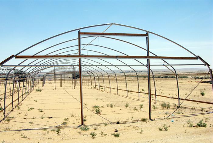 沙漠里可以种植蔬菜吗?沙漠修建的温室大棚原来有妙用