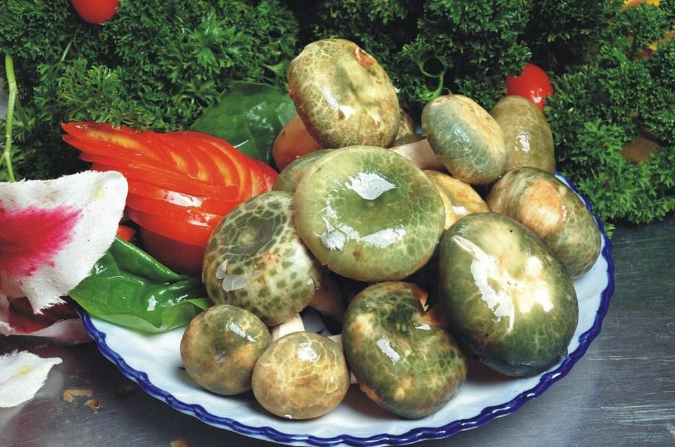 青头菌—让人不能拒绝的美味