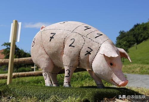 猪价触底反弹,18涨5跌!这次能否持久?