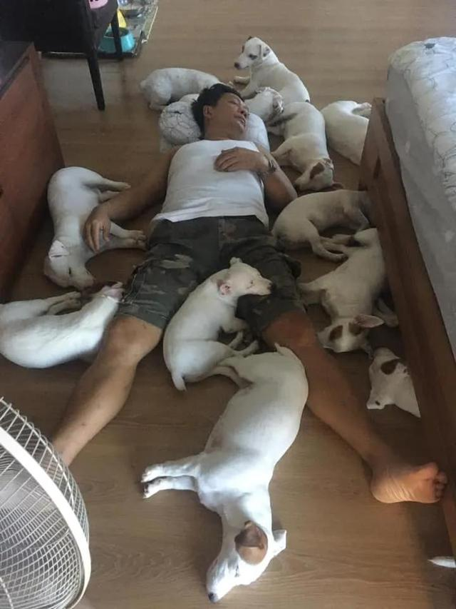 男子一口气养了20只狗,把整张床都铺满了:连买被子的钱都省了