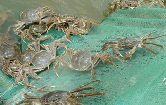 水產養殖中最容易犯的四個錯誤,養殖螃蟹更是要注意!