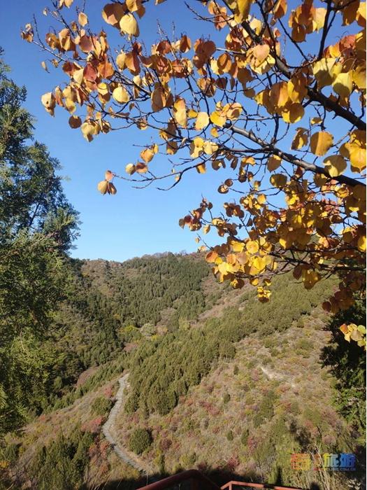 醉美圣泉山,秋景正美,漫山红叶等您来赏!