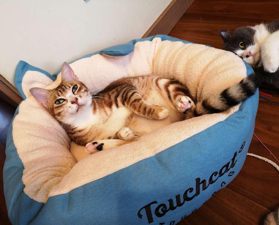 新手养猫秘籍(一般人我不告诉她)