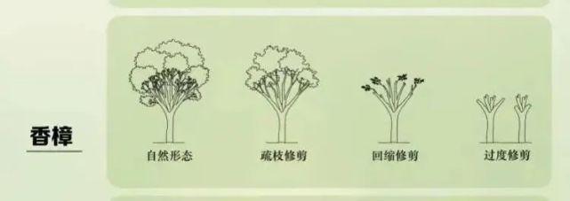 修剪自家别墅里的香樟树,上海一居民被罚款14.42万元!为啥?