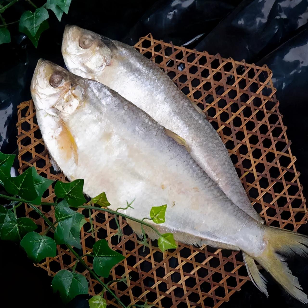 鲞鱼之鳓鱼,清明之美味