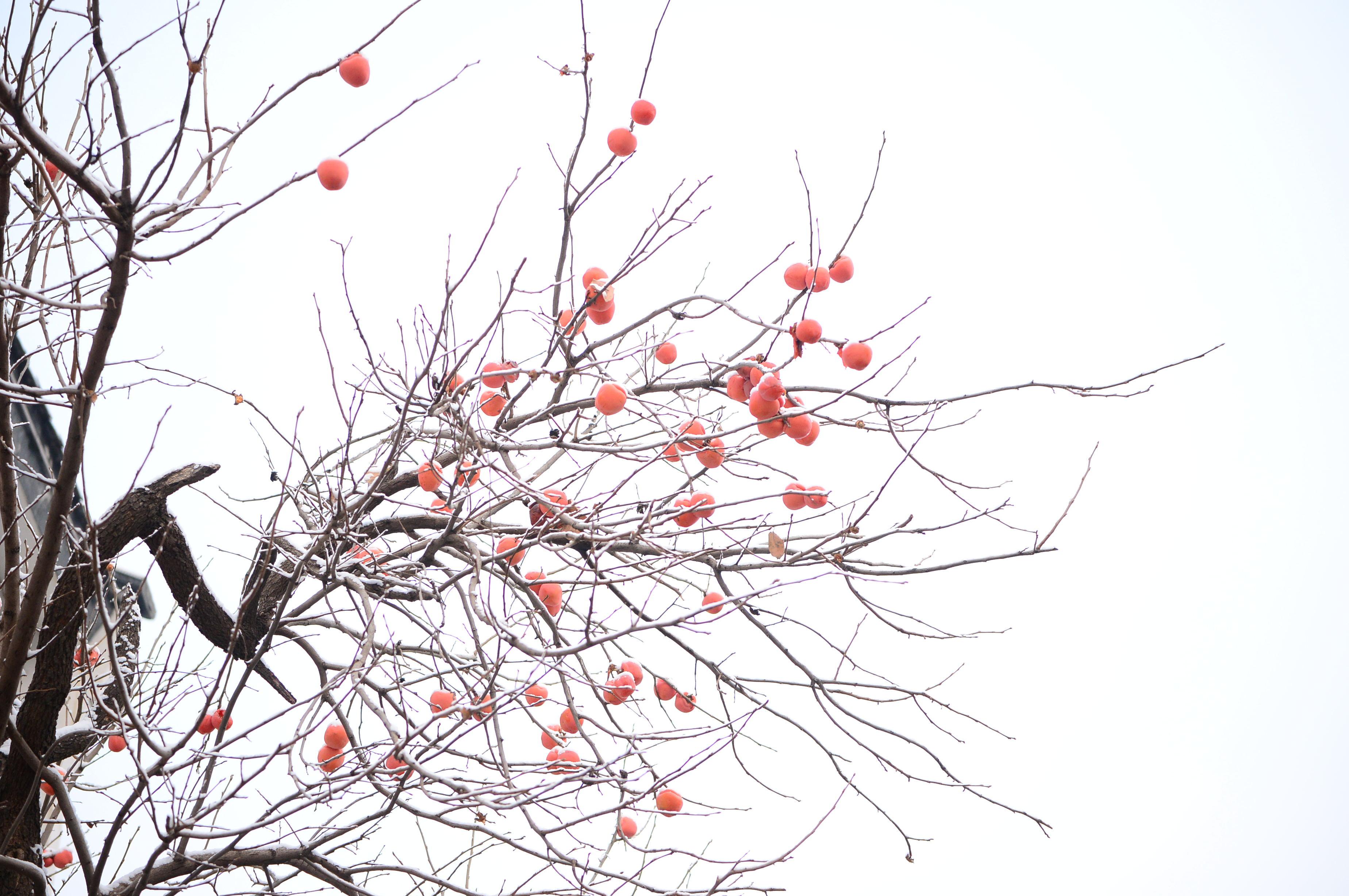 赤水湾:《雪》