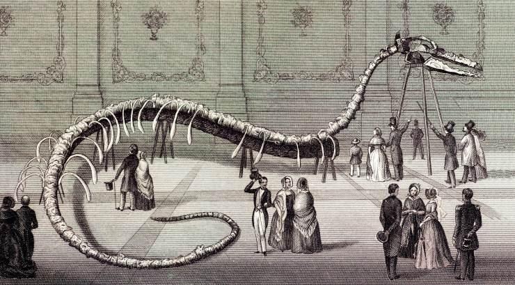 龙王鲸的真实资料及图片02
