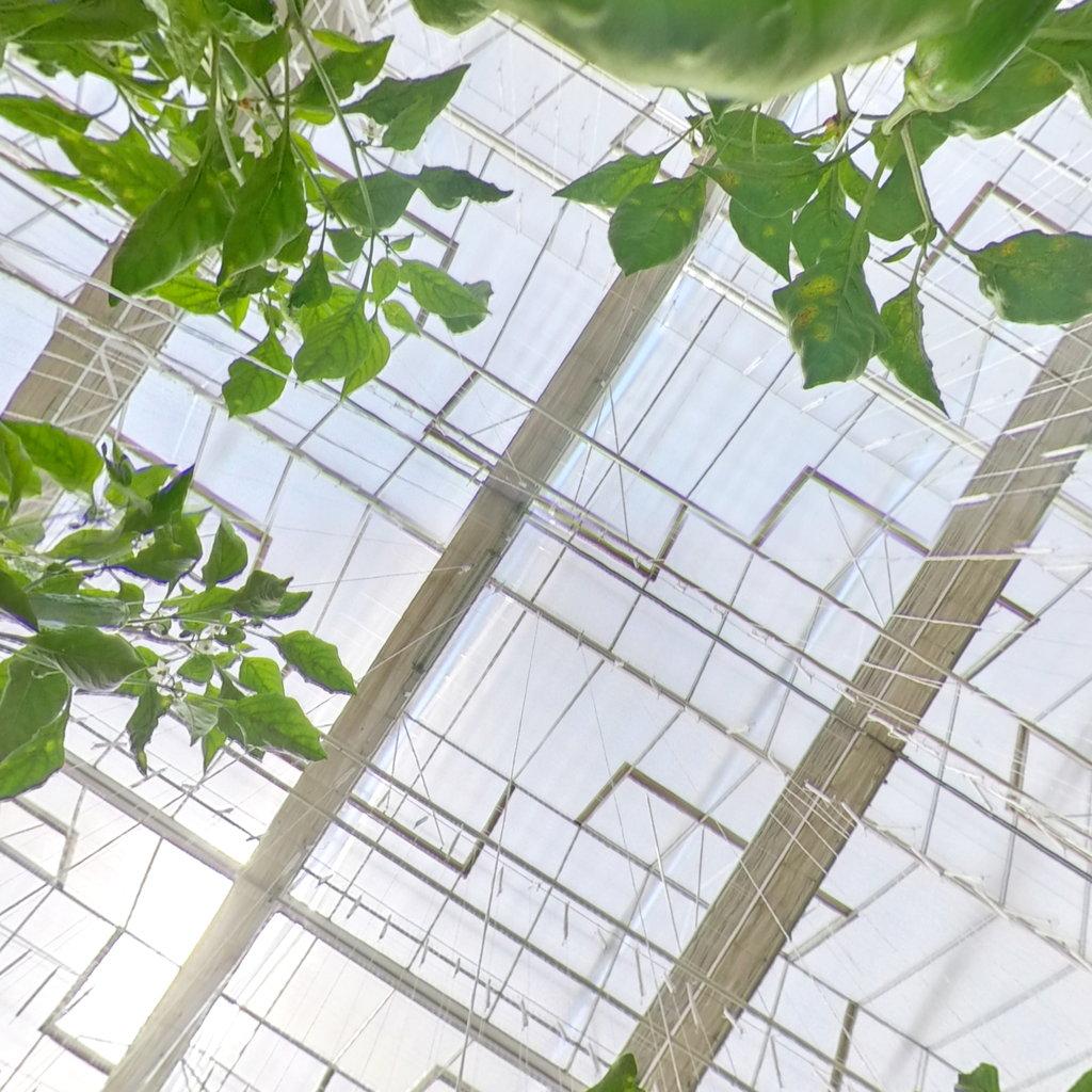 高效种植智能化温室大棚如何实现高产?看这座透明玻璃温建筑