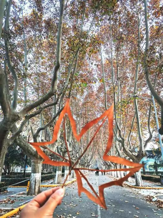 西安交大举办金色梧桐节  封路堆秋叶成网红打卡地