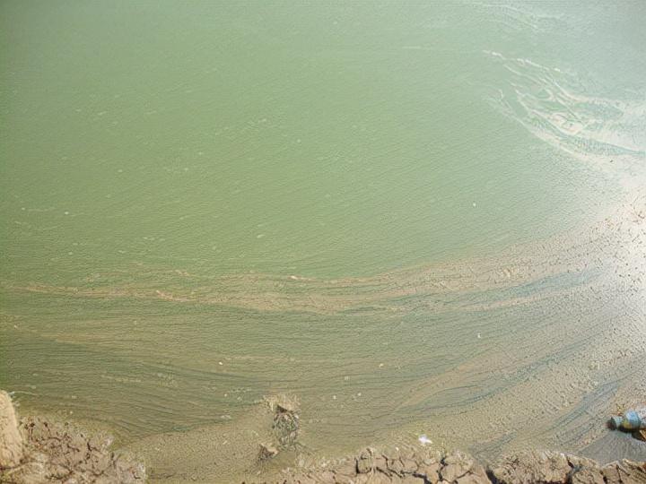 对虾土塘养殖之我见——土塘养虾的水质管理和土池养虾常见问题