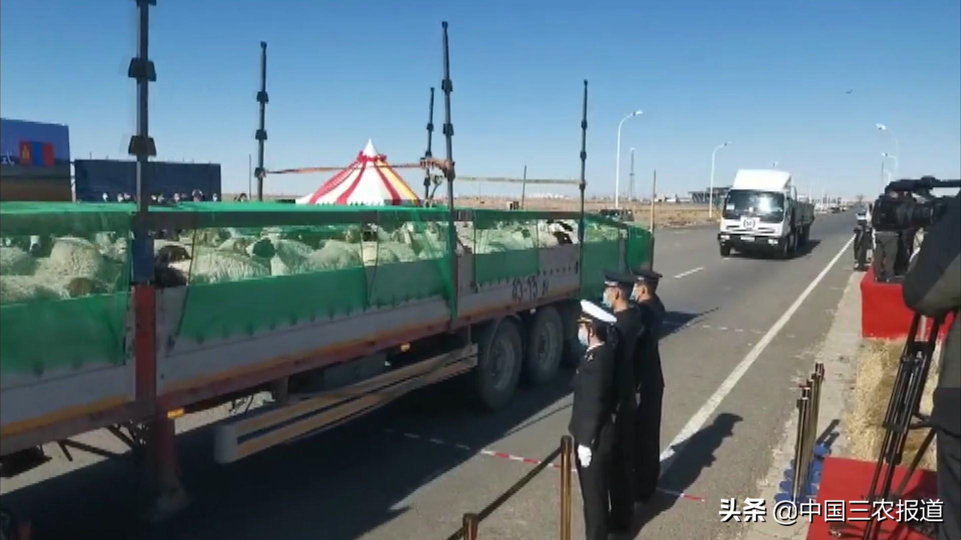 总价值3000万!来了!它们来了!蒙古国捐赠3万只羊首批4000只今日到达二连浩特