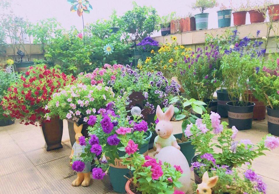 """4月养花,浇水别踩""""4个坑"""",要不然植物黄叶、枯枝、落花苞 家务 卫生 第1张"""
