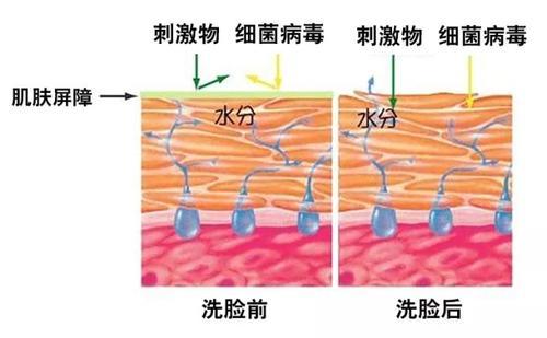 科学呵护你的敏感肌肤,这些你都了解吗?