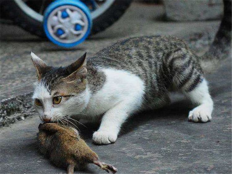 """猫咪智商高的6个表现,中3个以上,恭喜你养了只""""天才猫"""""""