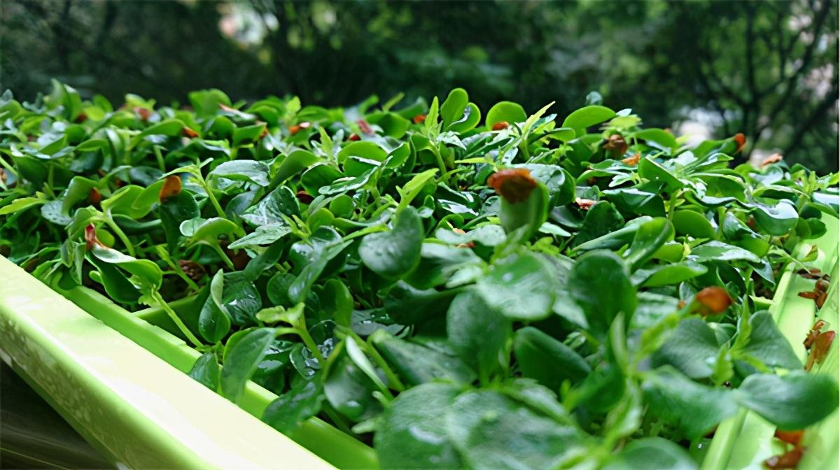 科技兴农 树绿色农业典范