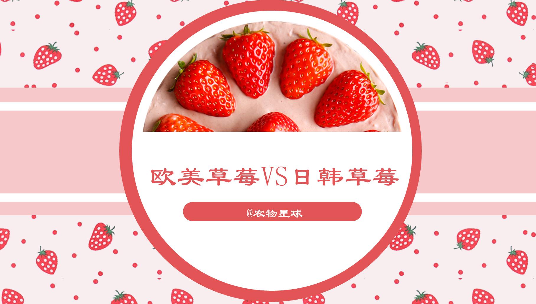 亚洲第一区欧美日韩精品:欧美草莓VS日韩草莓:一个是猛张飞,一个是林黛玉 欧美草莓V