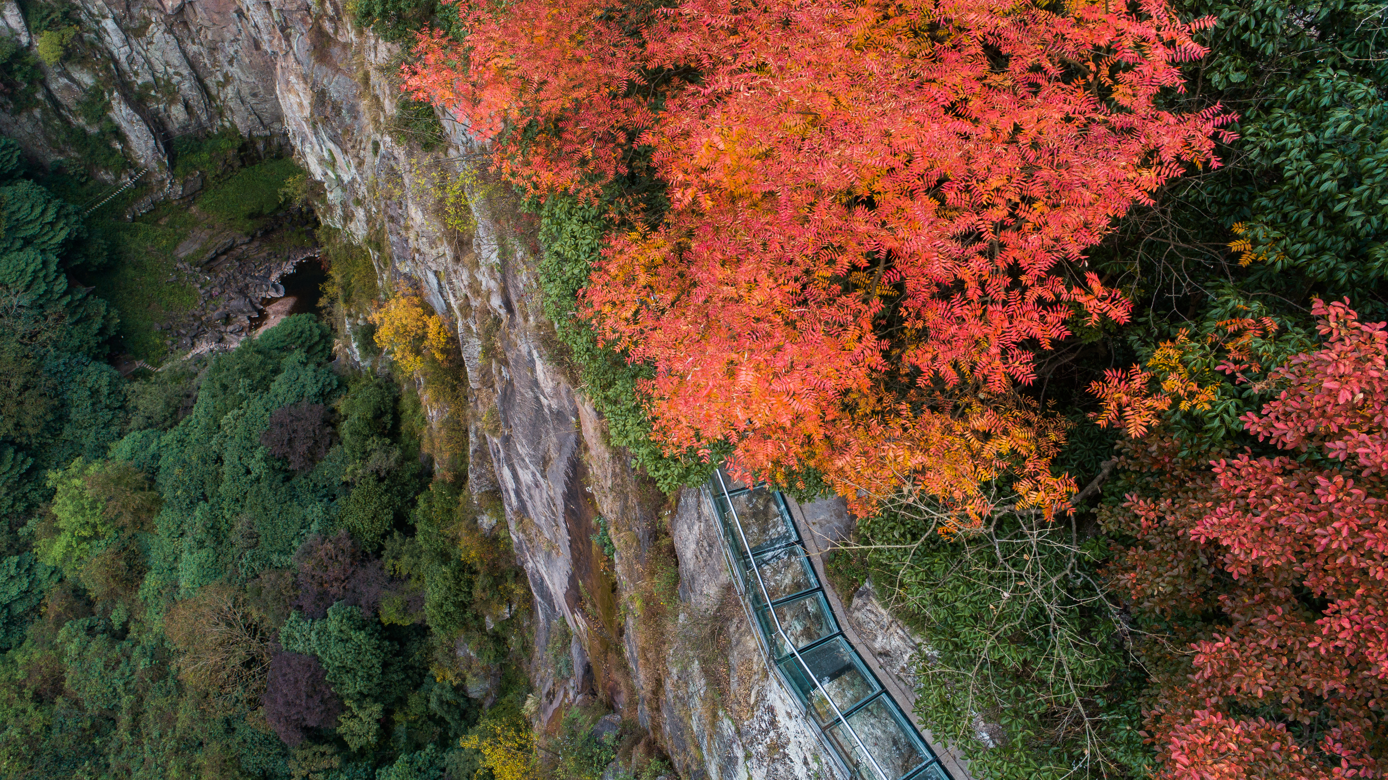 宁波必打卡,踏入深秋的季节,邂逅遍地金黄的童话世界