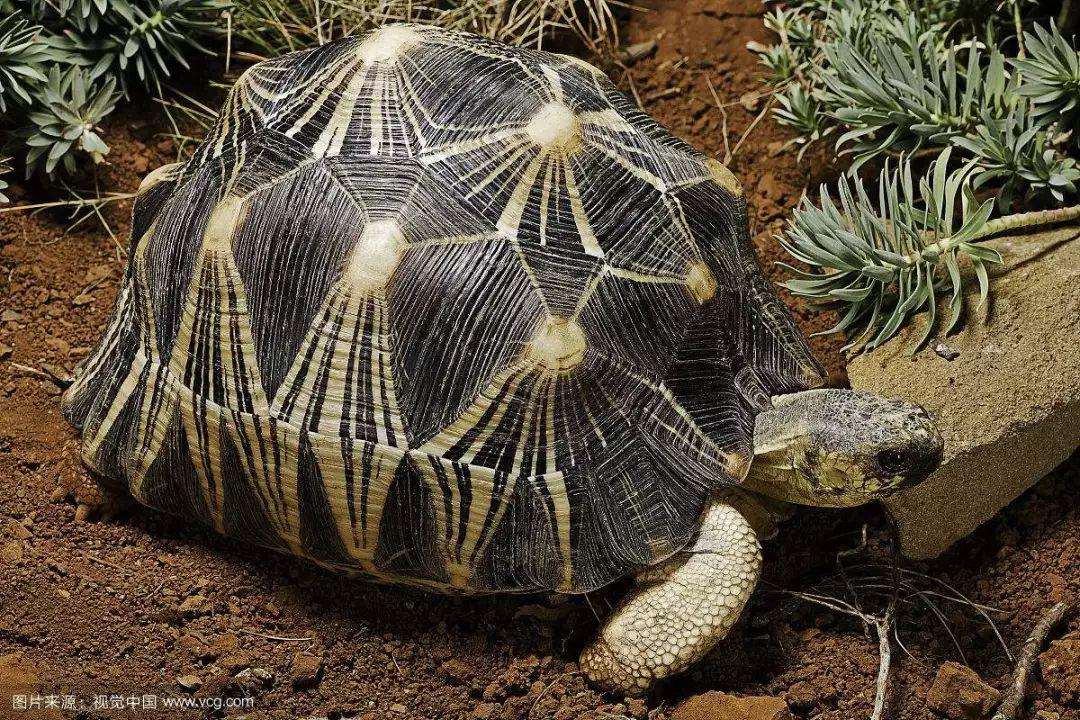 嚇!有人養了球蟒、綠鬣蜥當寵物,沒想到後果竟這麽嚴重!
