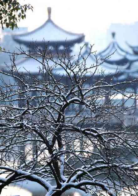 """大美中国""""醉美""""雪景,难得一见!"""