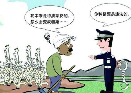 七旬老汉因为好奇种了这种花,竟触犯刑法被移送起诉……