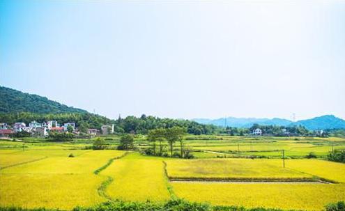 未来几年,中国农业发展的五大趋势