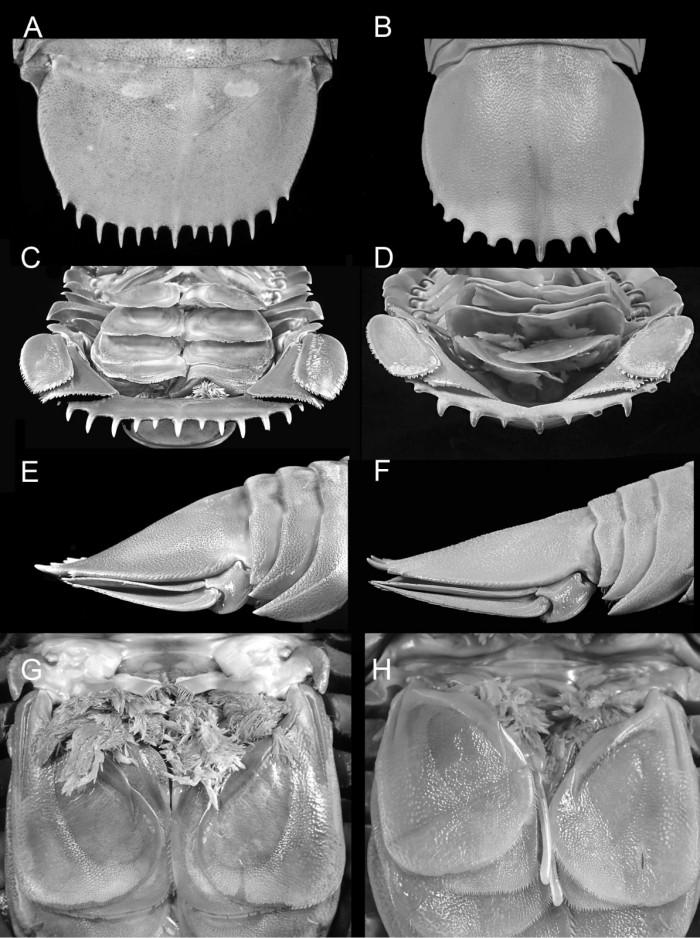 """科学家在印尼发现""""海蟑螂""""被确定为全新物种-第2张图片-IT新视野"""