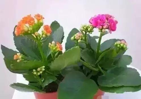 养花大全45集,收藏起来,什么花都能养好 家务卫生 第5张