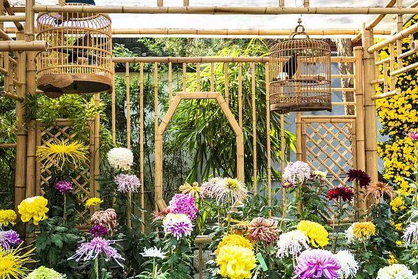 养花大全45集,收藏起来,什么花都能养好 家务卫生 第21张