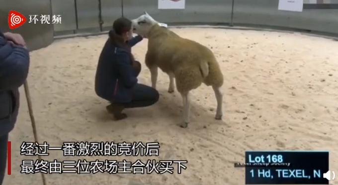 创纪录!世界上最贵的羊332万元成交,网友纷纷疑惑:贵在哪?