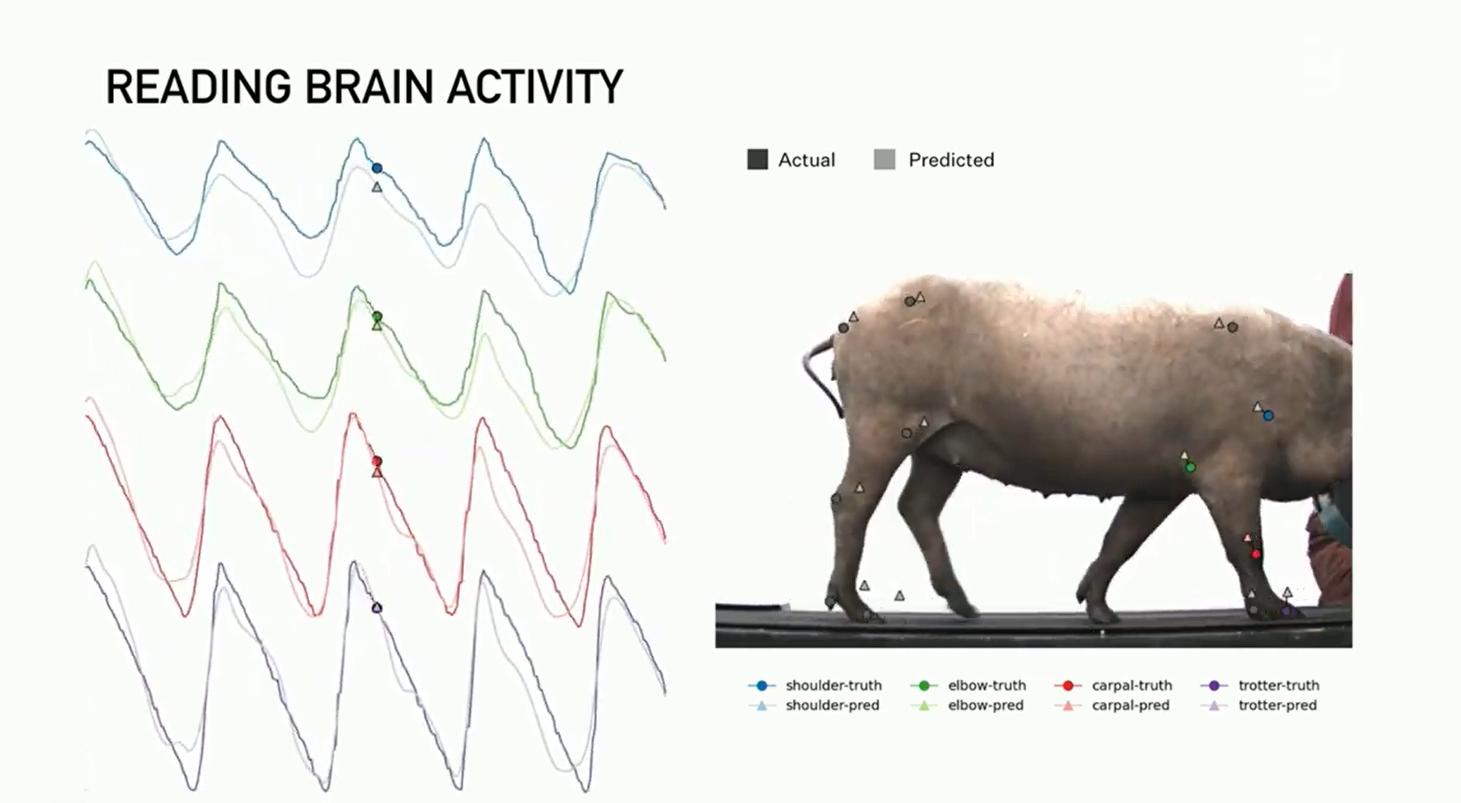 """马斯克公布最新""""脑机""""Neuralink:""""大脑与电脑连接""""更进一步"""